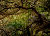 Bluebells by Valda Bailey